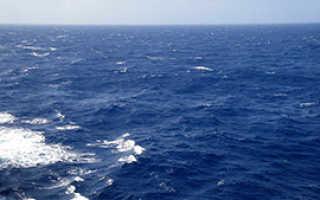 Саргассово море. Где находится, к какому океану относится, интересные факты, границы, бермудский треугольник