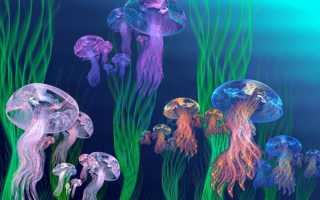 Самые ядовитые/опасные медузы в мире. Фото, интересные факты, где обитают
