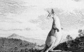 Кто открыл Австралию и в каком году. Кук Джеймс и другие мореплаватели. Посещения материка, история